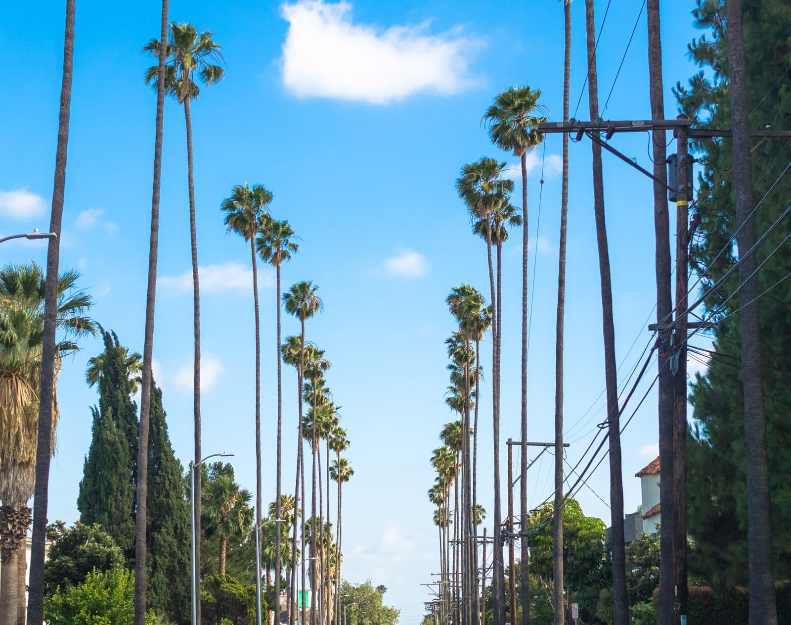 LA street with palm trees in color